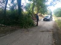 Albero cade su auto in transito.