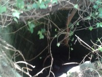 Cane finisce in un pozzo, salvato dai Vigili del Fuoco.