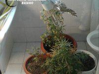 Coltivava piante di marijuana nel bagno della sua abitazione.