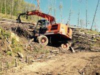 Danni ambientali a seguito di un taglio sulle montagne di Rotondi. Dov'è la Forestale?