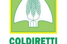 Campania avrà una legislazione organica all'avanguardia sul settore agroalimentare