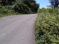 Cervinara. Chi deve pulire la strada  Quercino che da Cervinara porta a San Martino.