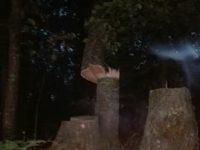 Cervinara. Segnalato un taglio di piante in località Coppola dopo la Casella della Forestale.