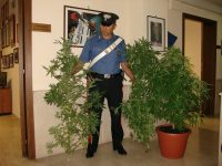 A Dugenta arrestato un 30 enne per spaccio di droga, sequestrati 400 grammi di marijuana