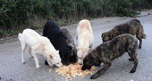 Promuovere e tutelare il rispetto e il benessere degli animali d'affezione e prevenire il randagismo