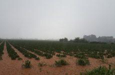 Agosto pazzo, agricoltura in ginocchio.