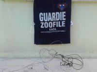 Cane resta imprigionato in una trappola per cinghiali.