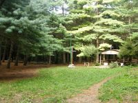 San Martino V.C.. Capuano e Abate elaborano richiesta Piano Assestamento Forestale.