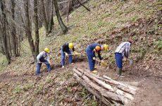Le politiche di forestazione in Campania.