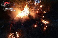 """Salvaguardia boschi, D'Amelio: """"Aumentare la vigilanza e puntare sulla prevenzione"""""""