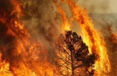 Incendi: M5s, Ue apra procedimento contro Regione Campania