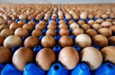 Uova contaminate: due casi in Campania, a Benevento e Sant'Anastasia.