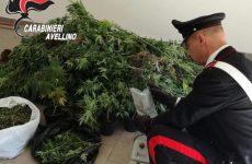 Sorpreso a coltivare marijuana: 33 enne arrestato dai carabinieri.