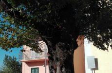 """Roccabascerana. Conclusa VIII edizione del premio """"Amici di Tuoro"""" , memorial Ernesto Covino."""