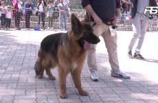 Cervinara. Mostra canina organizzata dall'Associazione La Rocca.