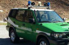 Incendio boschivo: 70 enne denunciato dai carabinieri forestale.