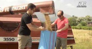 Cervinara. La sfida di Francesco Cioffi: ridare vita ai grani antichi.