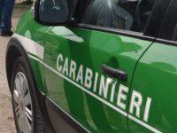 Sanzionata dai carabinieri forestale un'azienda agrituristica.