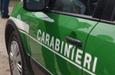 Abusivismo edilizio: carabinieri forestali denunciano 5 persone.