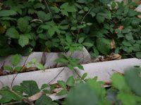 Rimosso amianto  segnalato da Guardie Ambientali Ekoclub a Cervinara.