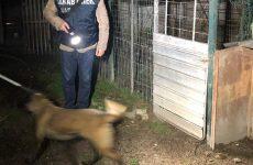 Denunciata una persona per maltrattamento e abbandono di animali.