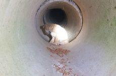 Cucciolo di Labrador messo in salvo dai Vigili del Fuoco.